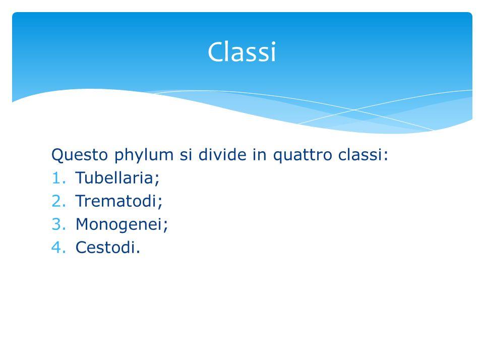 Classi Questo phylum si divide in quattro classi: Tubellaria;