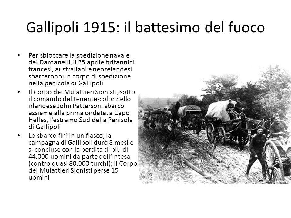 Gallipoli 1915: il battesimo del fuoco