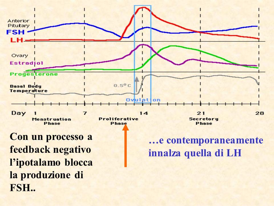 Con un processo a feedback negativo l'ipotalamo blocca la produzione di FSH..