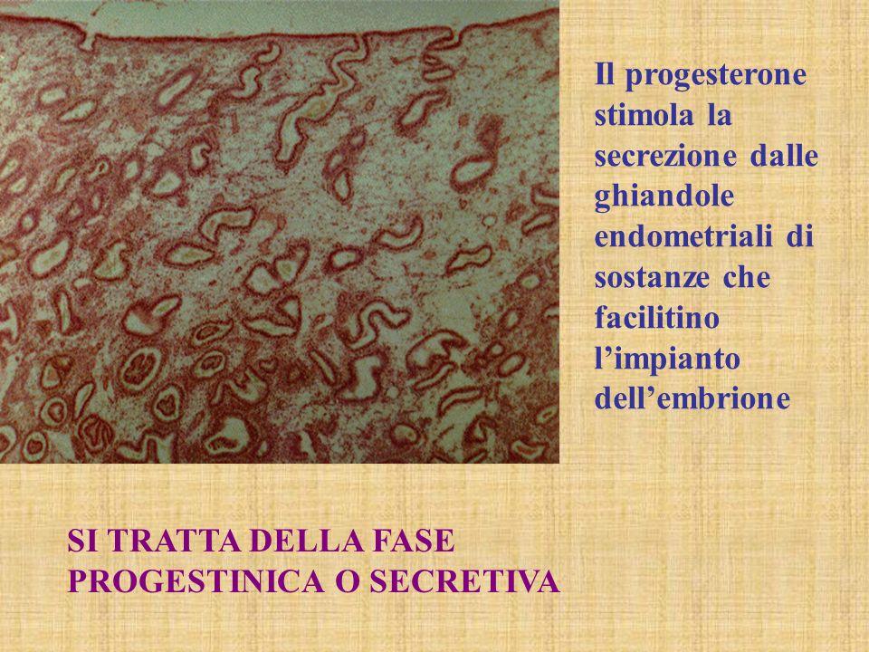 Il progesterone stimola la secrezione dalle ghiandole endometriali di sostanze che facilitino l'impianto dell'embrione