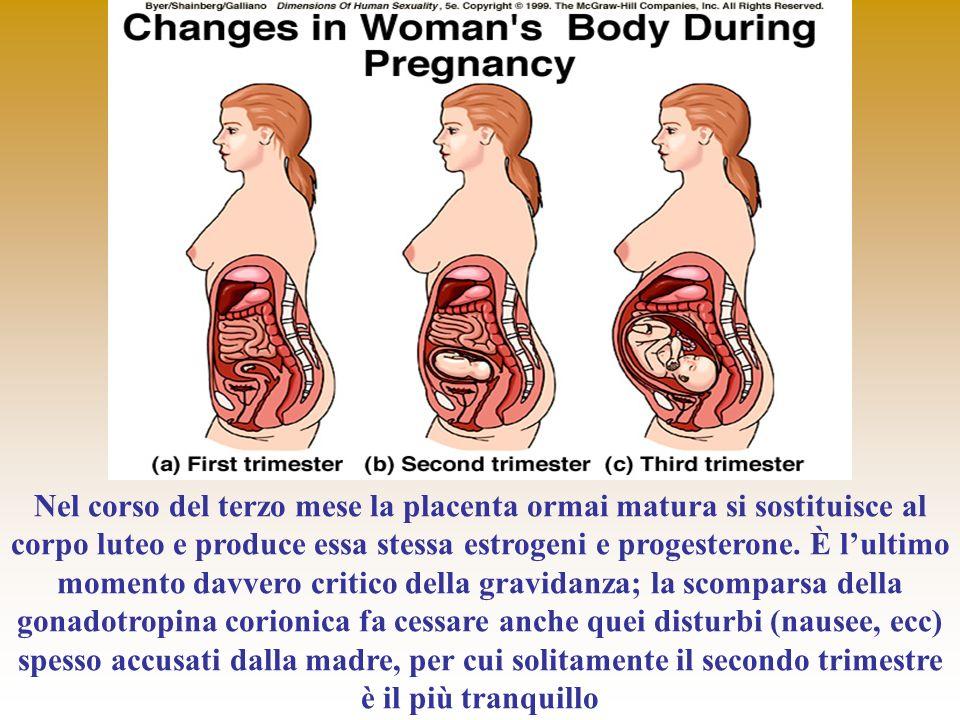 Nel corso del terzo mese la placenta ormai matura si sostituisce al corpo luteo e produce essa stessa estrogeni e progesterone.