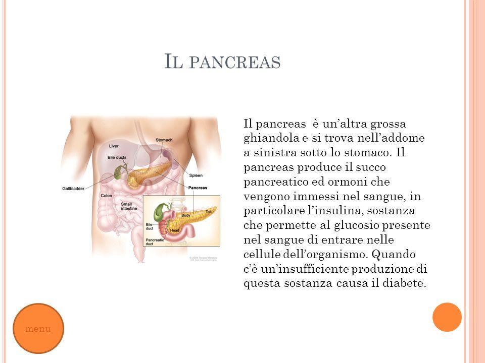 Il pancreas