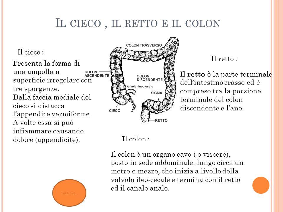 Il cieco , il retto e il colon