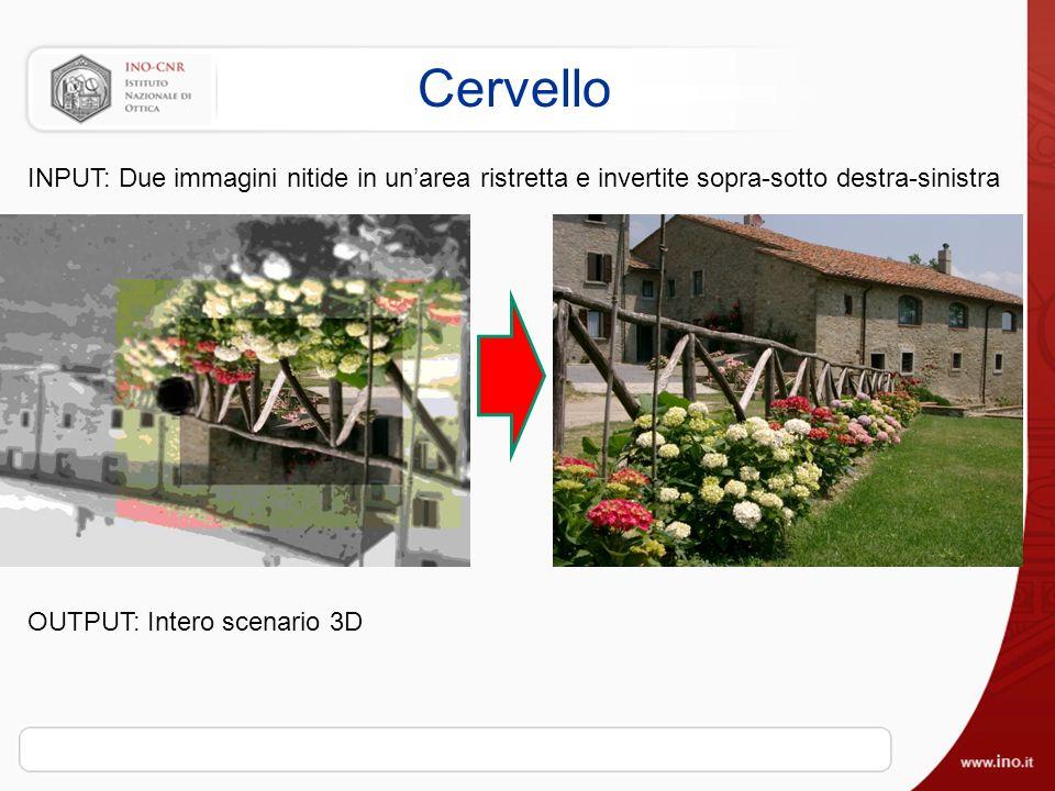 Cervello INPUT: Due immagini nitide in un'area ristretta e invertite sopra-sotto destra-sinistra.