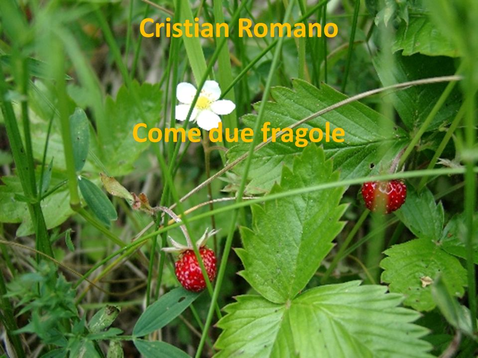 Cristian Romano Come due fragole