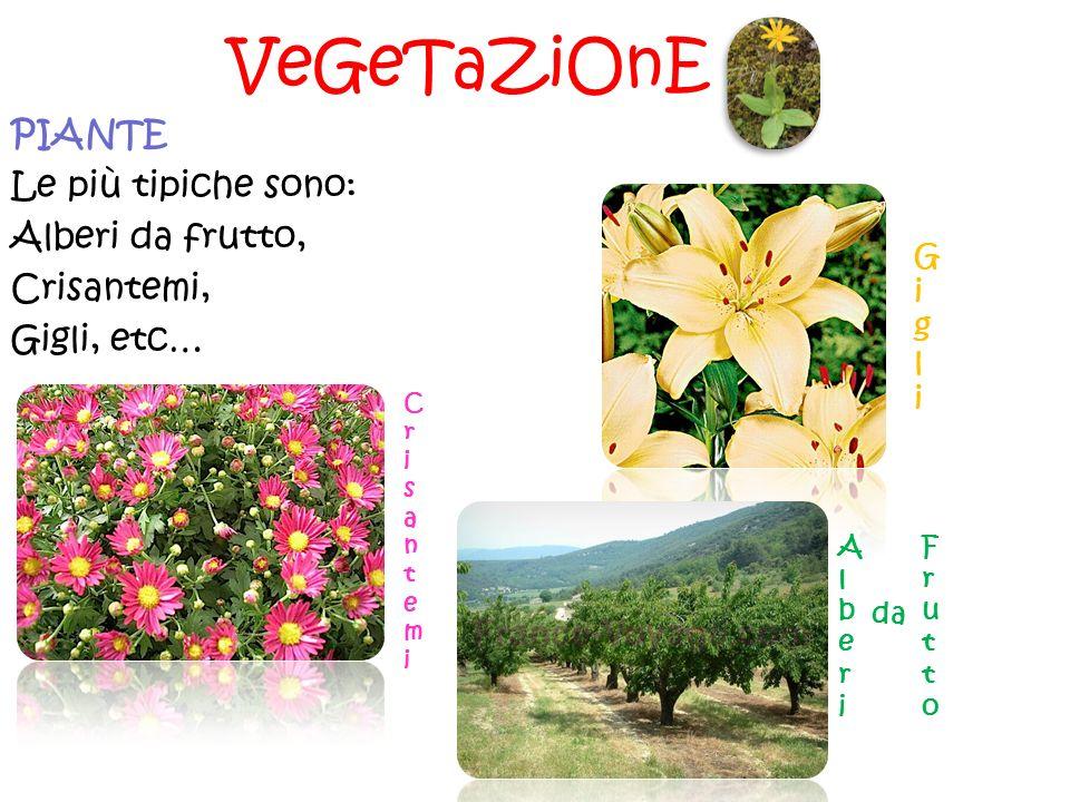 VeGeTaZiOnE PIANTE Le più tipiche sono: Alberi da frutto, Crisantemi,