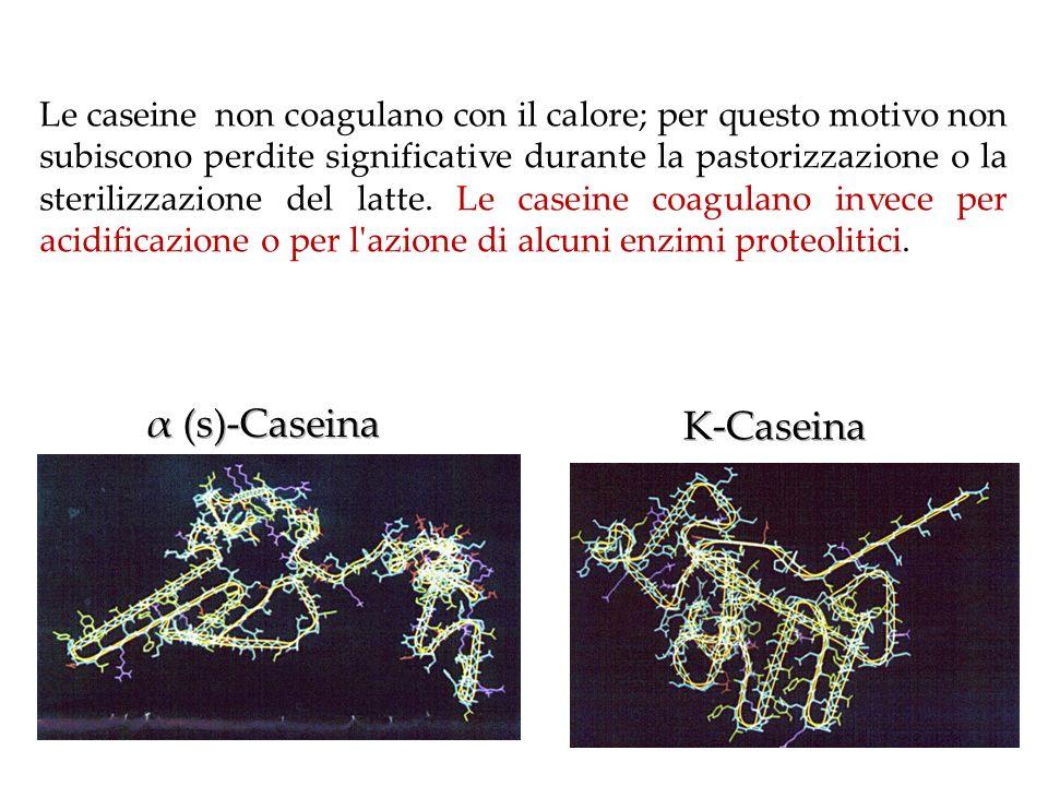 α (s)-Caseina K-Caseina