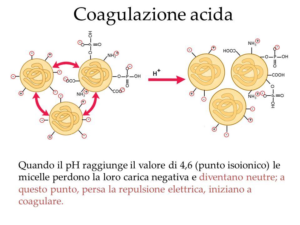 Coagulazione acida