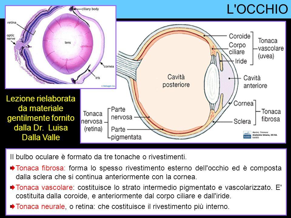 L OCCHIO Lezione rielaborata da materiale gentilmente fornito dalla Dr. Luisa Dalla Valle.