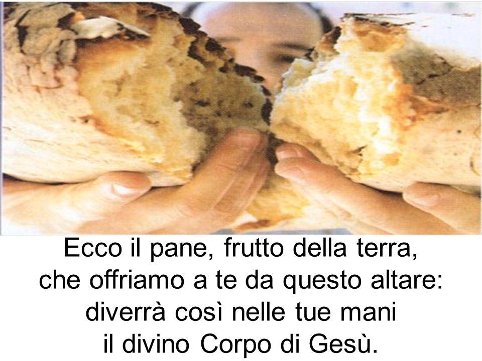 Ecco il pane, frutto della terra, che offriamo a te da questo altare: