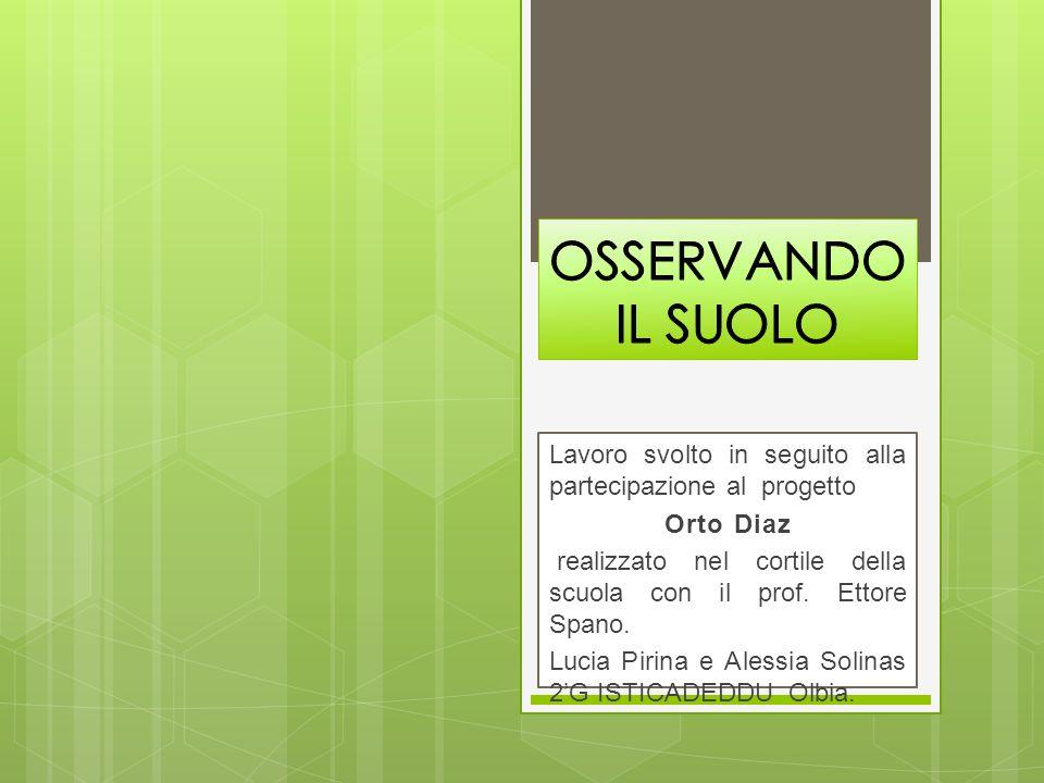 OSSERVANDO IL SUOLO Lavoro svolto in seguito alla partecipazione al progetto. Orto Diaz.
