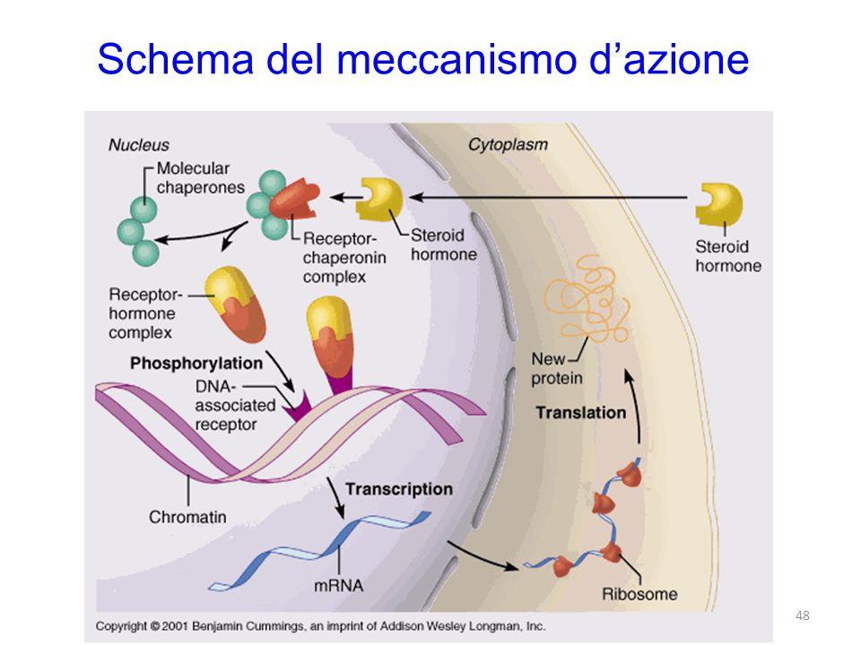 Schema del meccanismo d'azione
