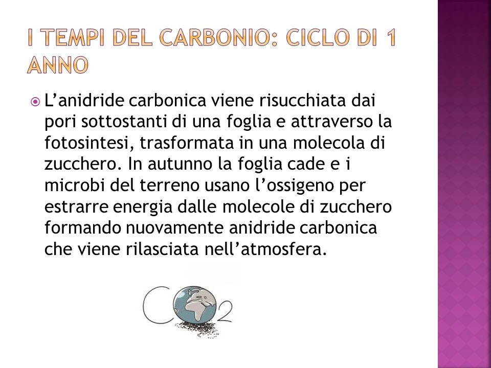 I tempi del carbonio: ciclo di 1 anno