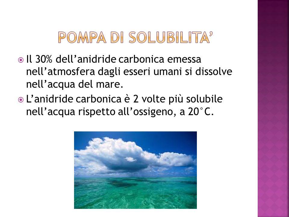Pompa di solubilita' Il 30% dell'anidride carbonica emessa nell'atmosfera dagli esseri umani si dissolve nell'acqua del mare.