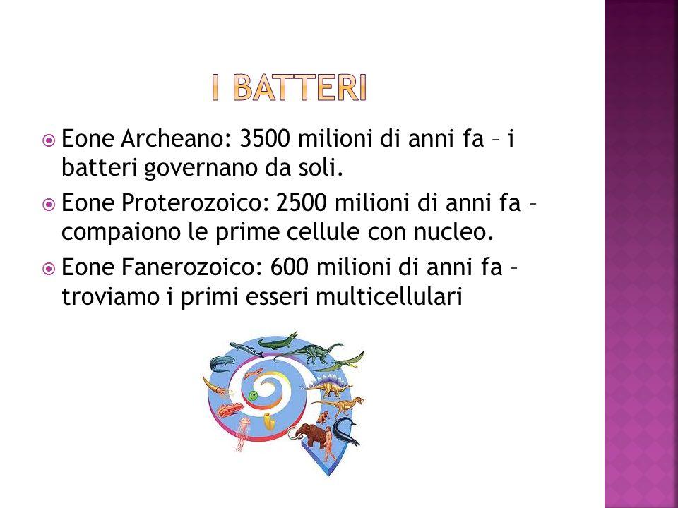 i batteri Eone Archeano: 3500 milioni di anni fa – i batteri governano da soli.