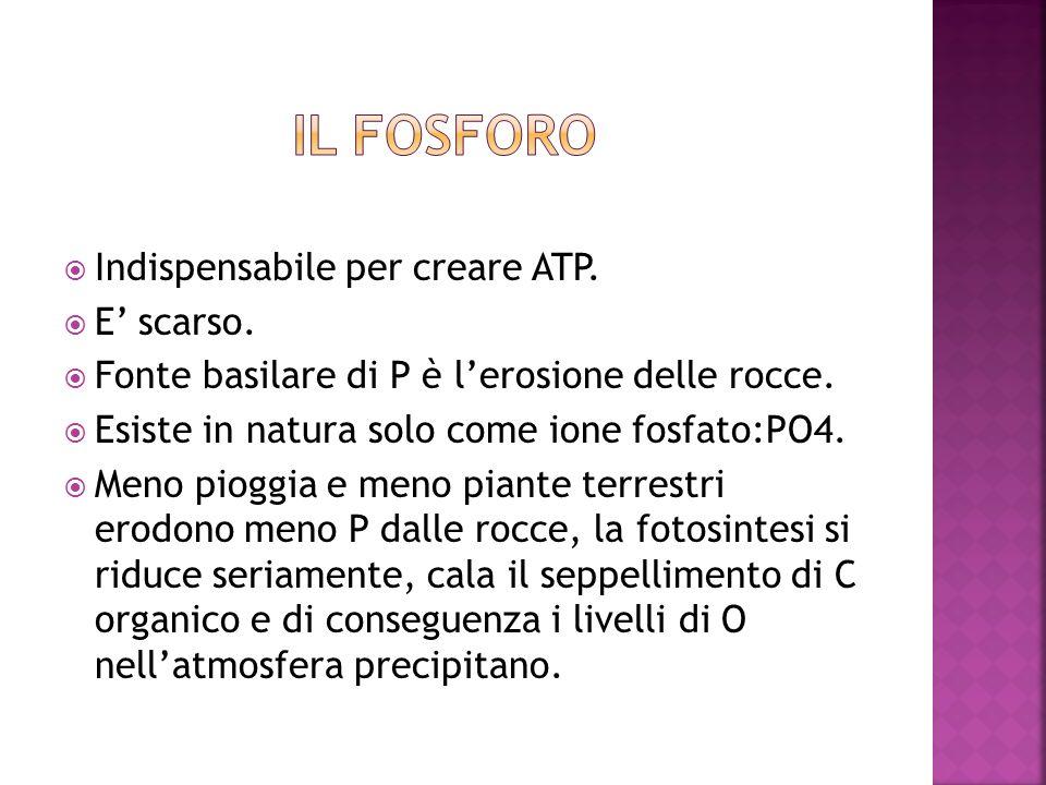 il fosforo Indispensabile per creare ATP. E' scarso.