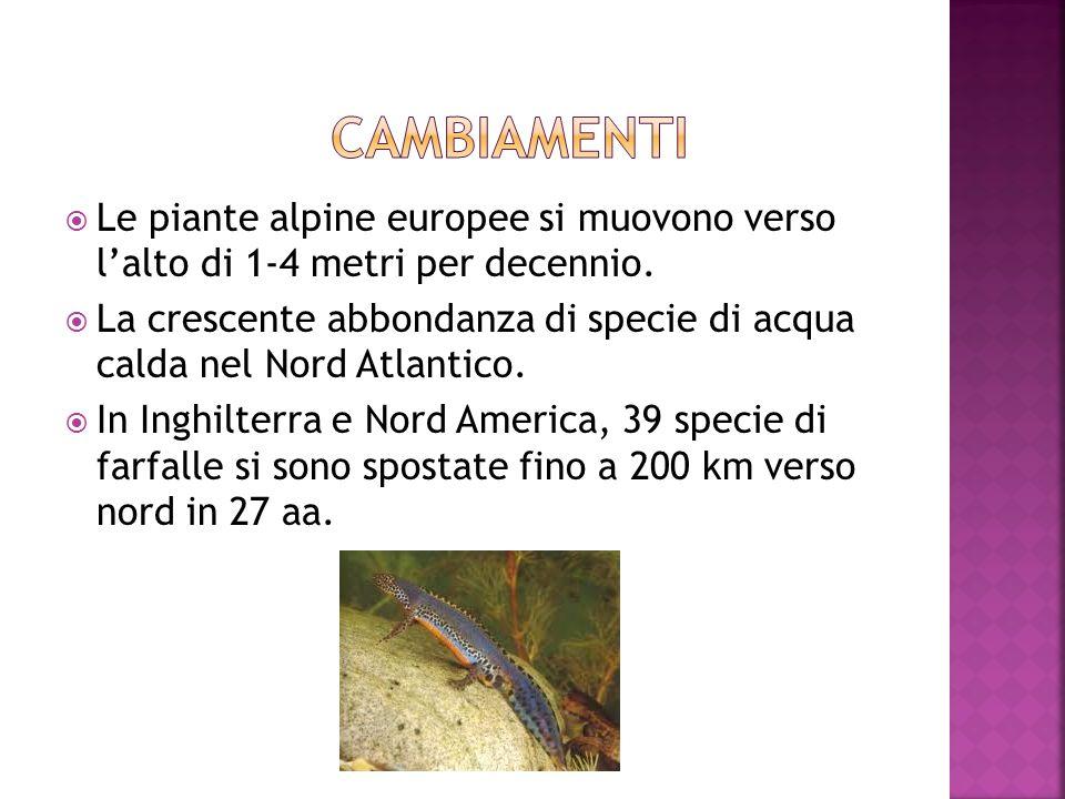cambiamenti Le piante alpine europee si muovono verso l'alto di 1-4 metri per decennio.