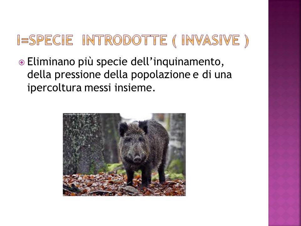 I=SPECIE INTRODOTTE ( INVASIVE )