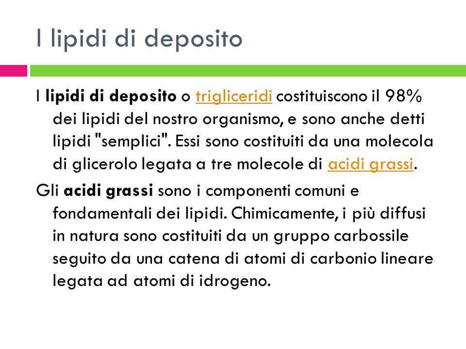I lipidi di deposito