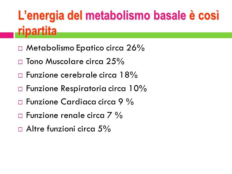 L'energia del metabolismo basale è così ripartita