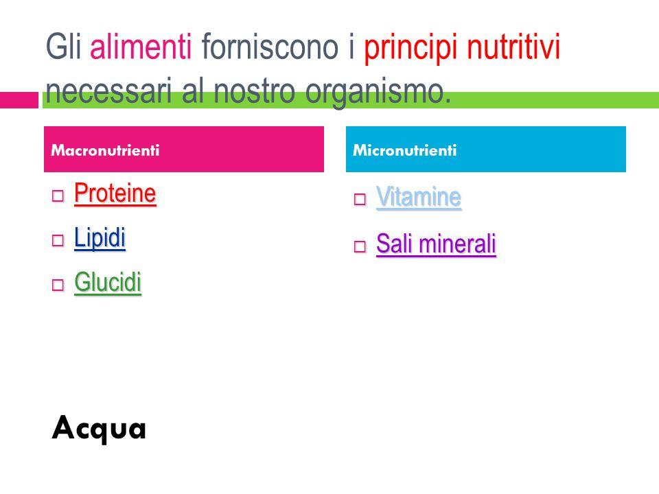 Gli alimenti forniscono i principi nutritivi necessari al nostro organismo.