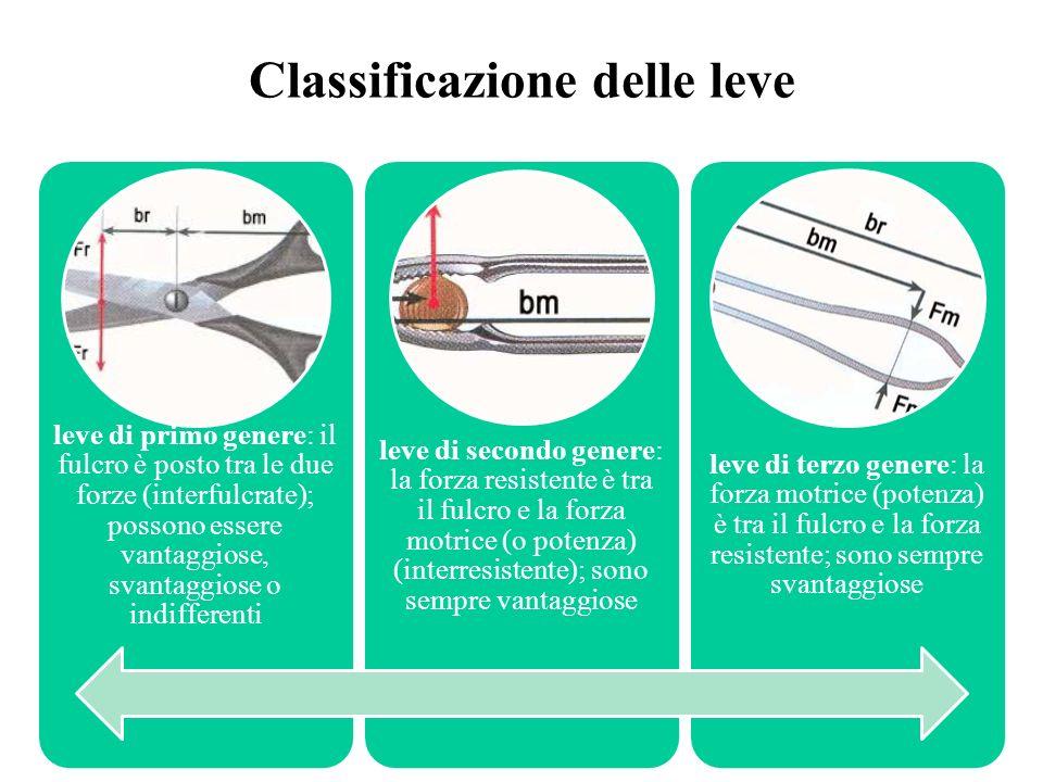 Classificazione delle leve