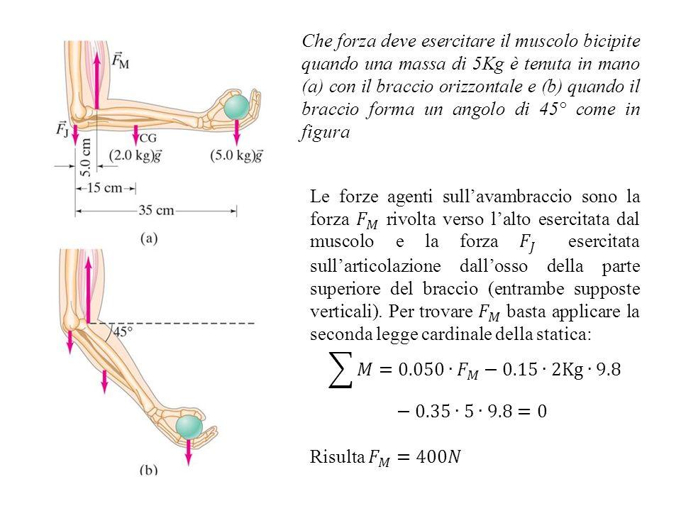 Che forza deve esercitare il muscolo bicipite quando una massa di 5Kg è tenuta in mano (a) con il braccio orizzontale e (b) quando il braccio forma un angolo di 45° come in figura