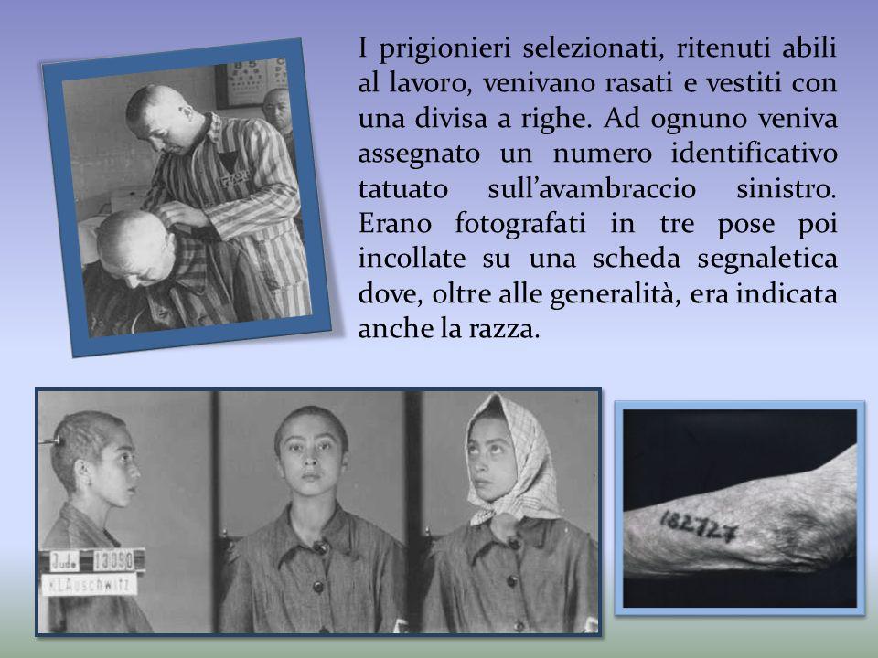 I prigionieri selezionati, ritenuti abili al lavoro, venivano rasati e vestiti con una divisa a righe.