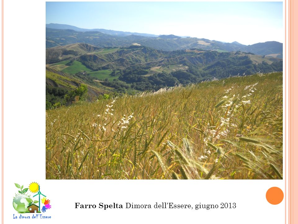 Farro Spelta Dimora dell'Essere, giugno 2013