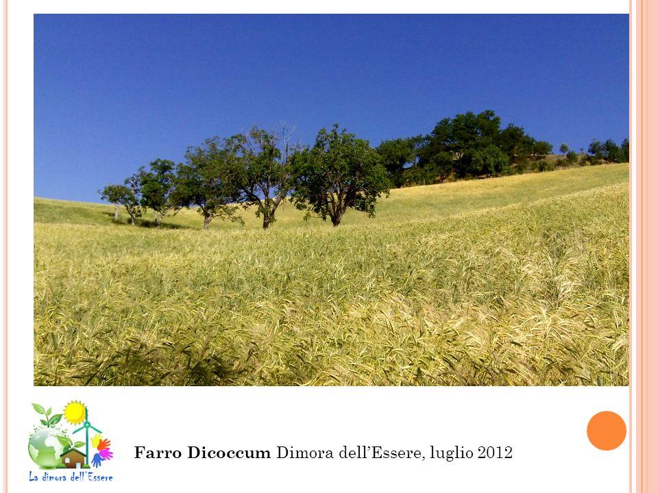 Farro Dicoccum Dimora dell'Essere, luglio 2012