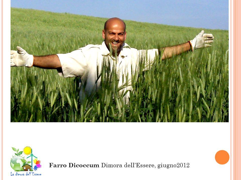 Farro Dicoccum Dimora dell'Essere, giugno2012