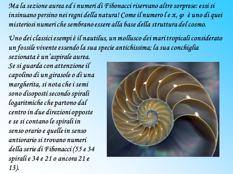Ma la sezione aurea ed i numeri di Fibonacci riservano altre sorprese: essi si insinuano persino nei regni della natura! Come il numero l e π, φ è uno di quei misteriosi numeri che sembrano essere alla base della struttura del cosmo.