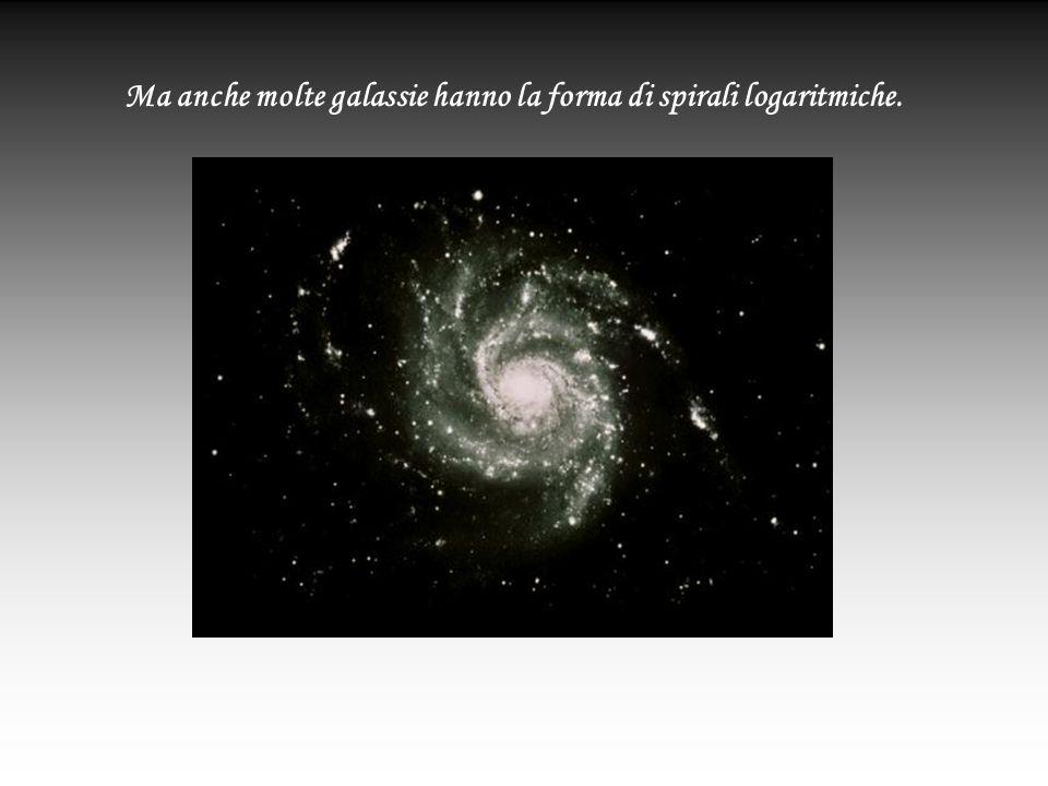 Ma anche molte galassie hanno la forma di spirali logaritmiche.