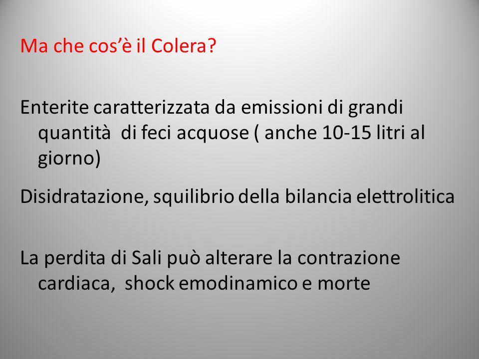 Ma che cos'è il Colera Enterite caratterizzata da emissioni di grandi quantità di feci acquose ( anche 10-15 litri al giorno)