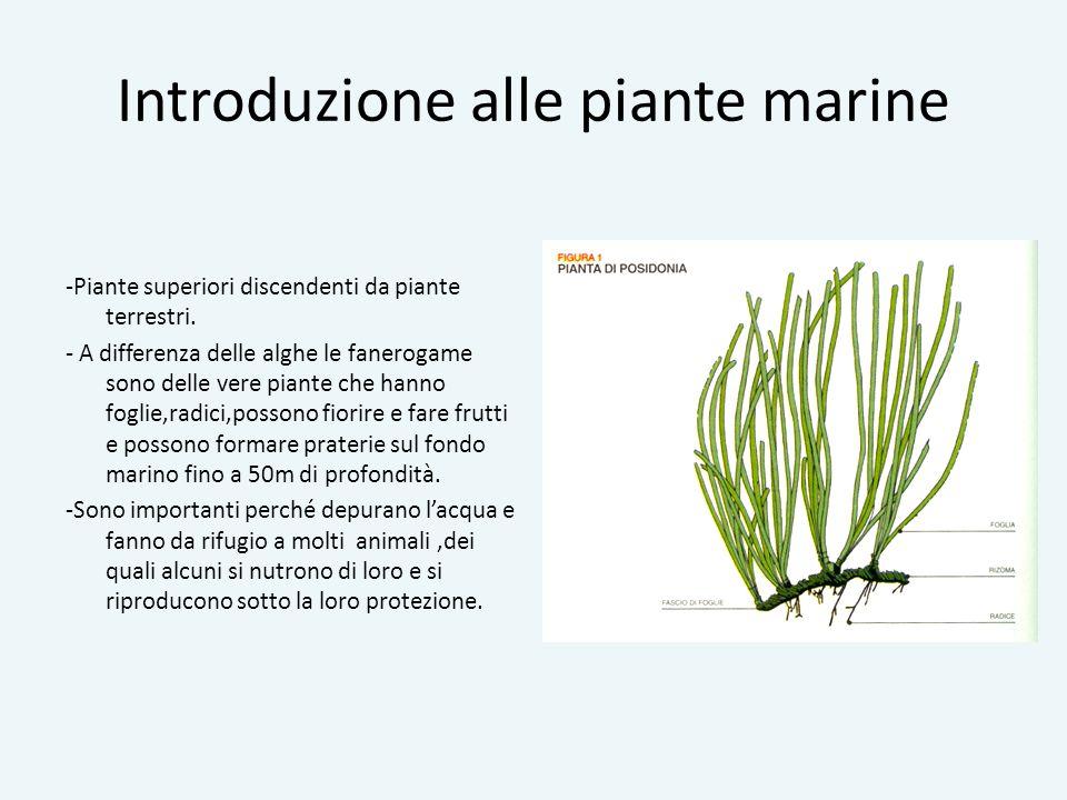 Introduzione alle piante marine