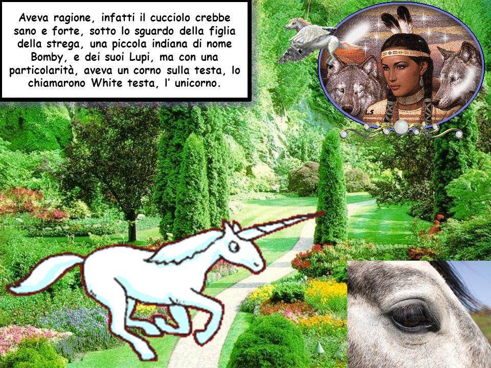 Aveva ragione, infatti il cucciolo crebbe sano e forte, sotto lo sguardo della figlia della strega, una piccola indiana di nome Bomby, e dei suoi Lupi, ma con una particolarità, aveva un corno sulla testa, lo chiamarono White testa, l' unicorno.