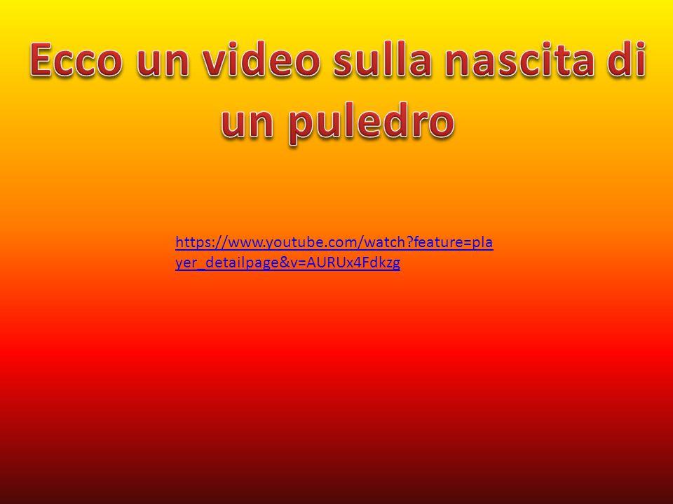 Ecco un video sulla nascita di un puledro
