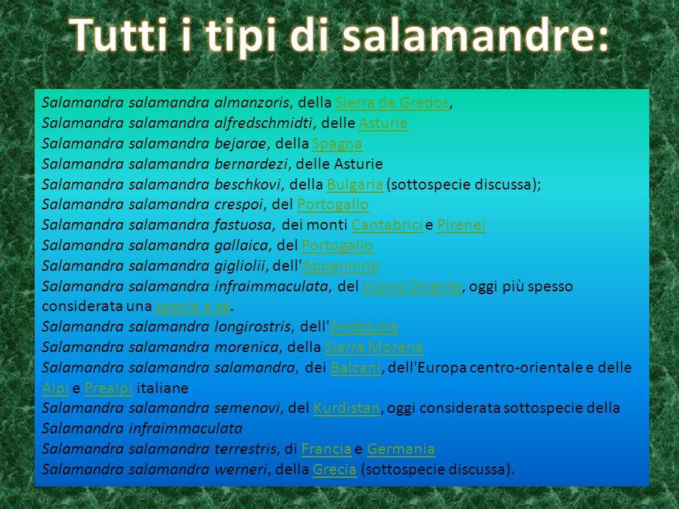 Tutti i tipi di salamandre: