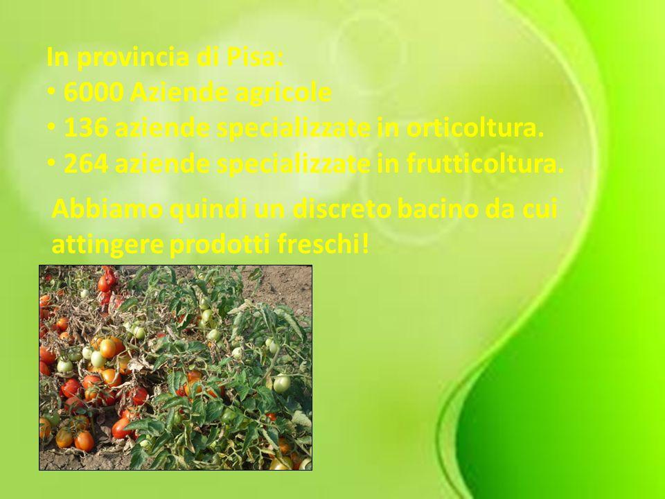 In provincia di Pisa: 6000 Aziende agricole. 136 aziende specializzate in orticoltura. 264 aziende specializzate in frutticoltura.