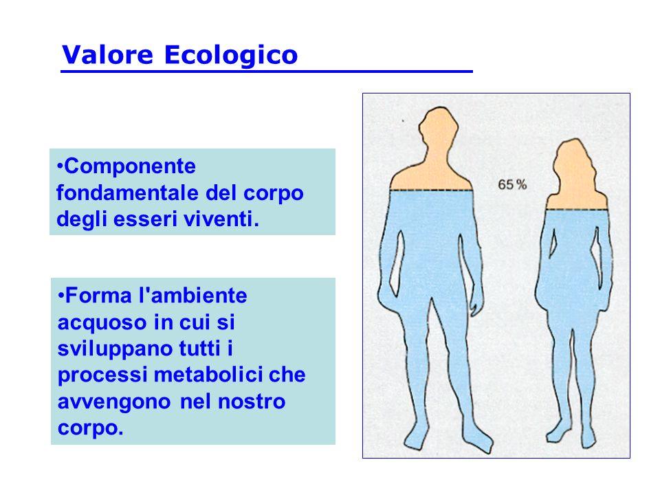 Valore Ecologico Componente fondamentale del corpo degli esseri viventi.