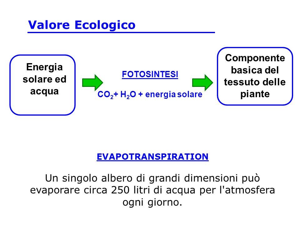 Componente basica del tessuto delle piante Energia solare ed acqua