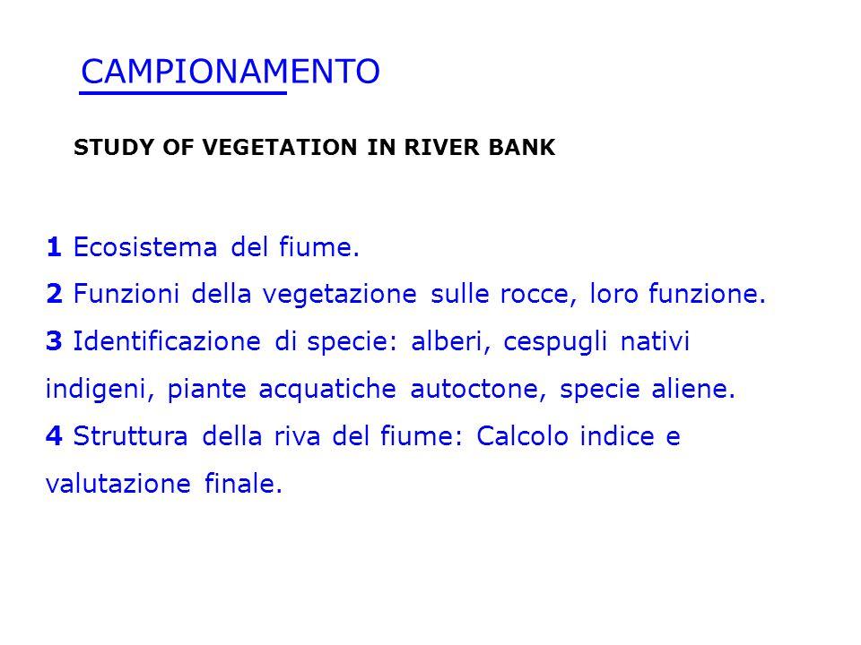 CAMPIONAMENTO 1 Ecosistema del fiume.
