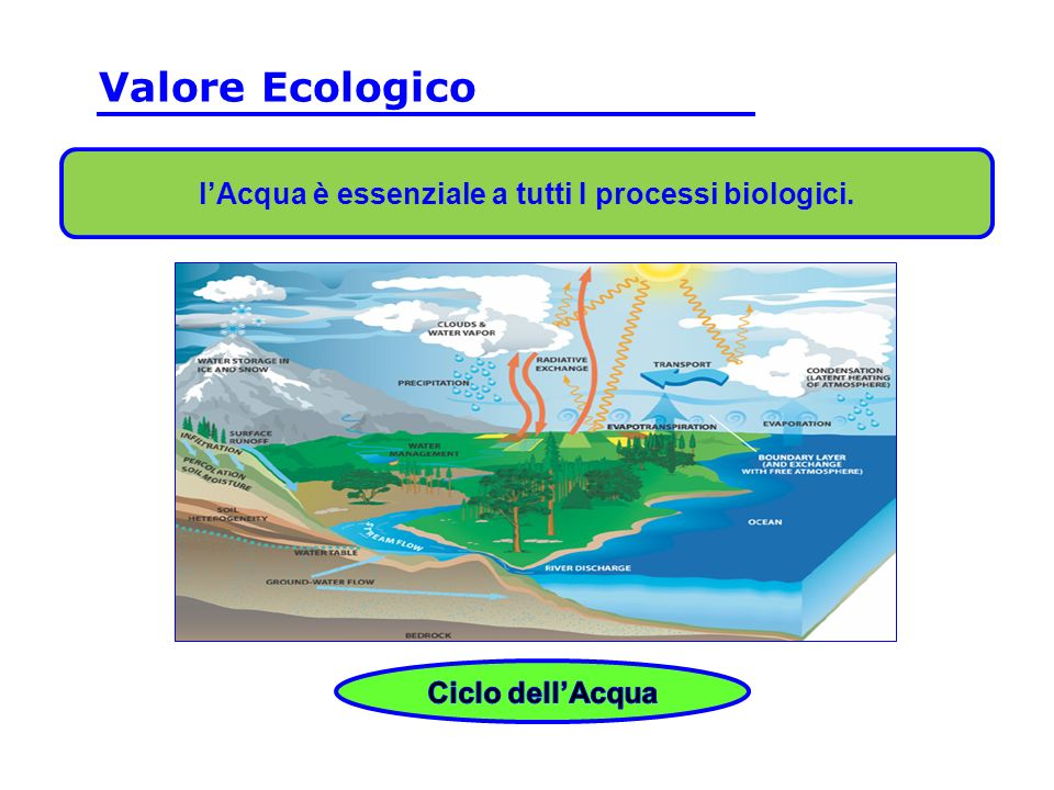 l'Acqua è essenziale a tutti I processi biologici.