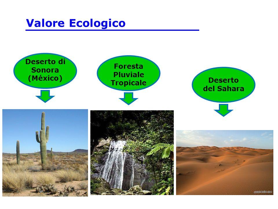 Deserto di Sonora (México) Foresta Pluviale Tropicale