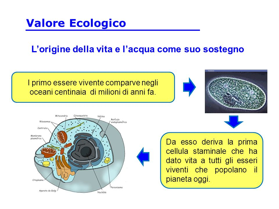Valore Ecologico L'origine della vita e l'acqua come suo sostegno