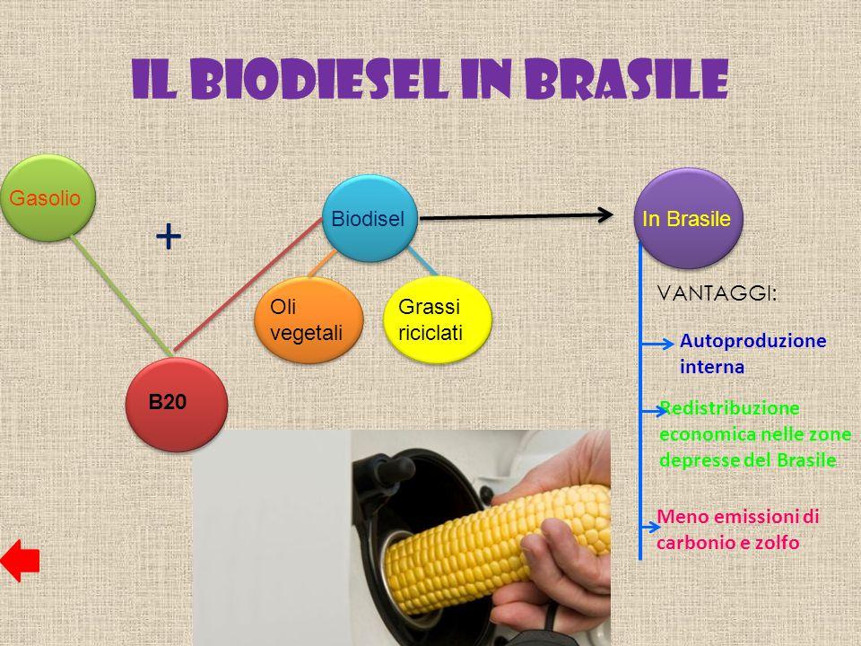 Il Biodiesel in Brasile
