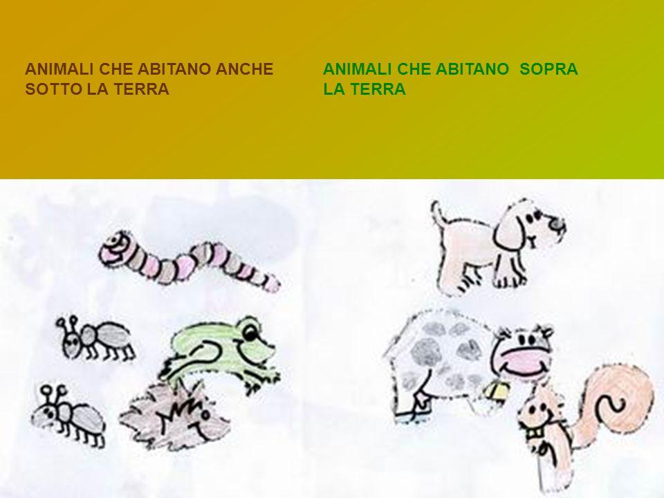 ANIMALI CHE ABITANO ANCHE SOTTO LA TERRA