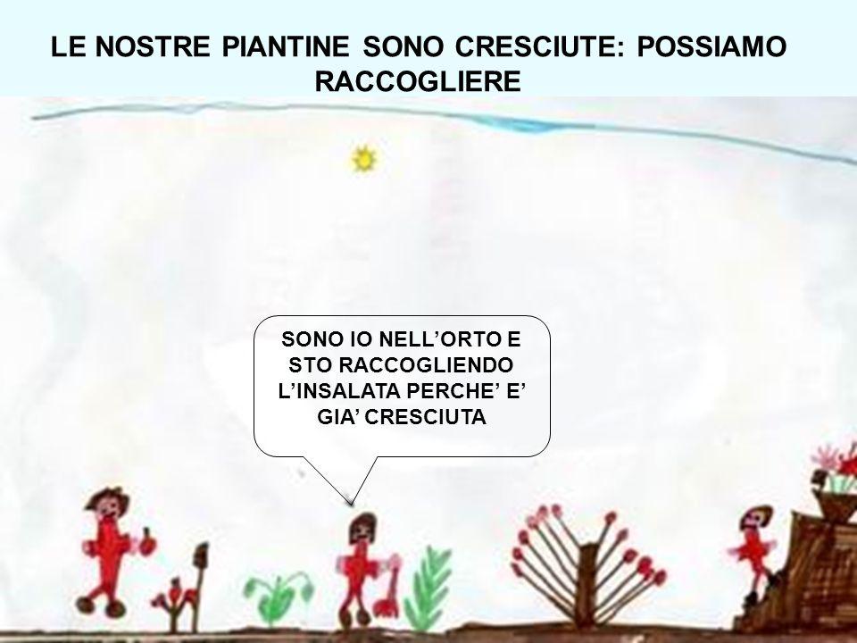 LE NOSTRE PIANTINE SONO CRESCIUTE: POSSIAMO RACCOGLIERE