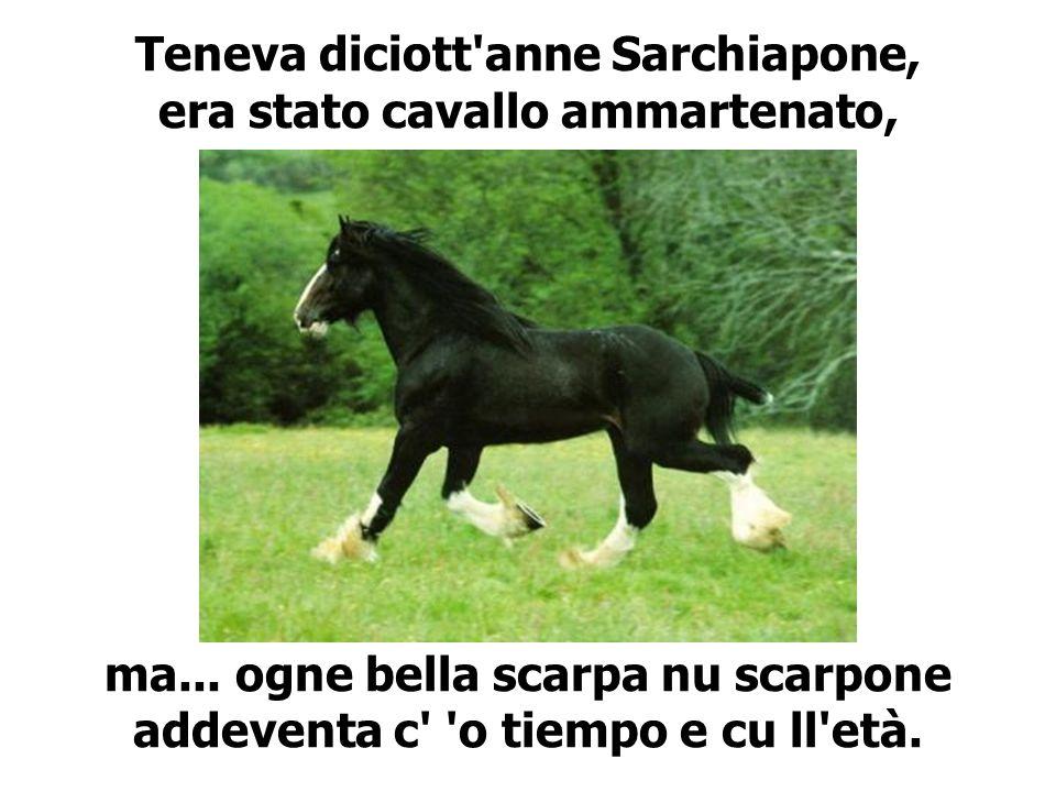 Teneva diciott anne Sarchiapone, era stato cavallo ammartenato,