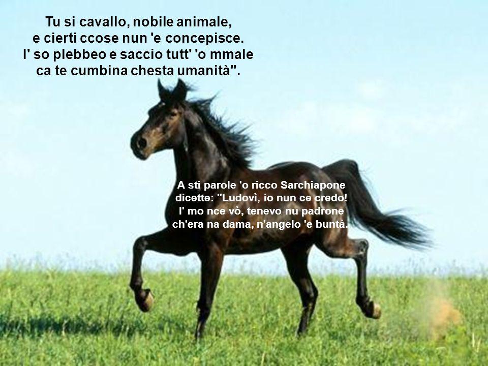 Tu si cavallo, nobile animale, e cierti ccose nun e concepisce